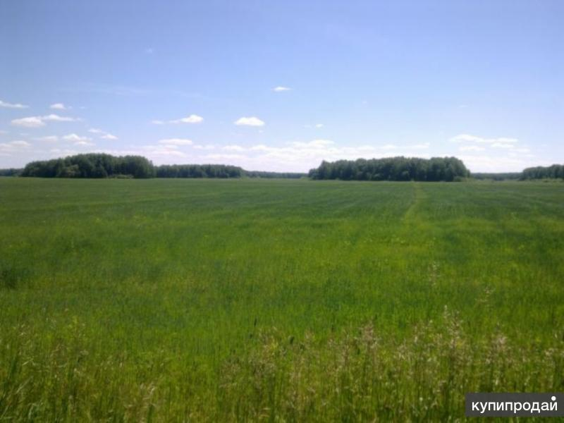 Продам земельный участок 22,4 га в пригороде г.Тюмени (7км)
