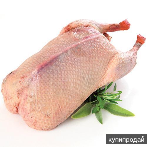 Продам мясо гуся, утки ,индейки