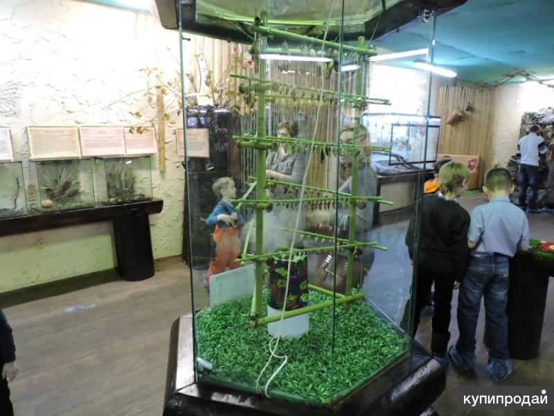 Высоко прпбыльный бизнес ферма Живых Экзотических Бабочки изПакистана