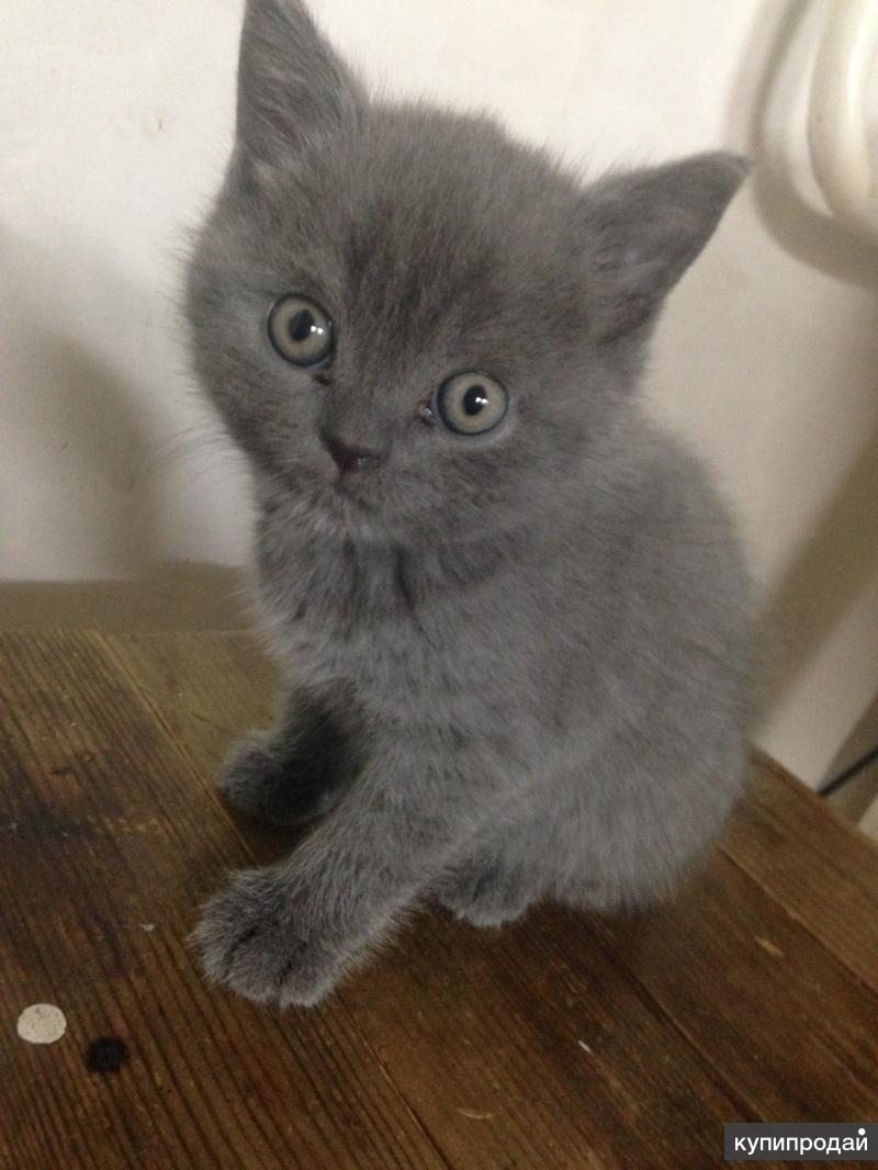 Котёнок 1мес