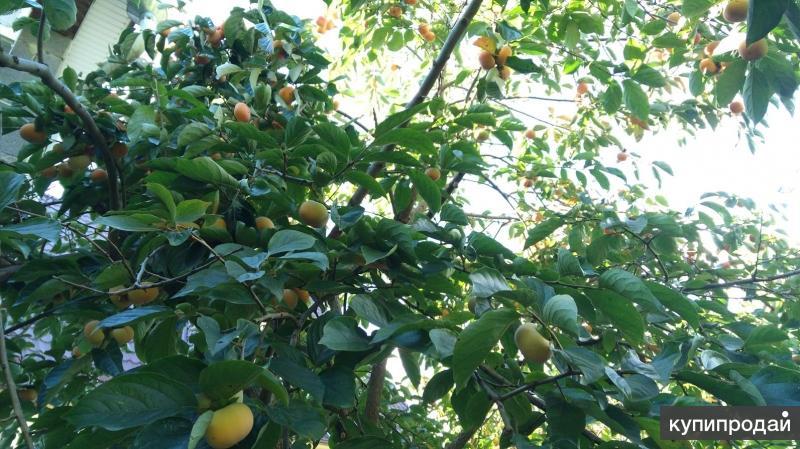 только плодовые деревья сочи фото с названиями главы государств-участников