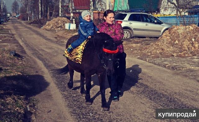 Лошадь и пони для фотосессий,детских мероприятий