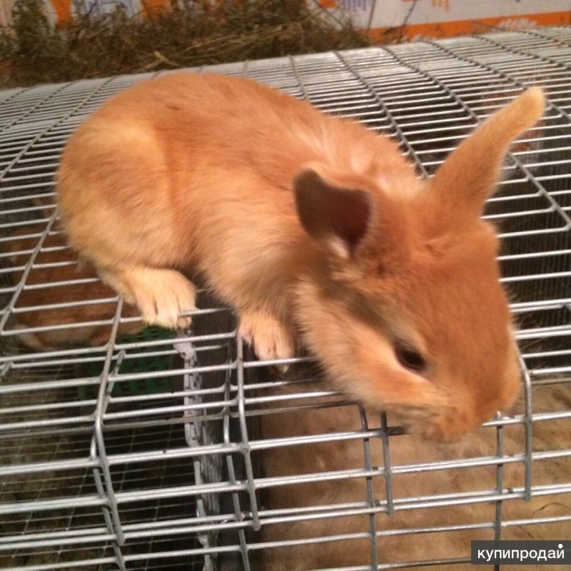 Продается кроличья ферма!!!!!!!