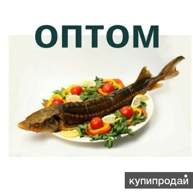 Астраханский Осетр оптом