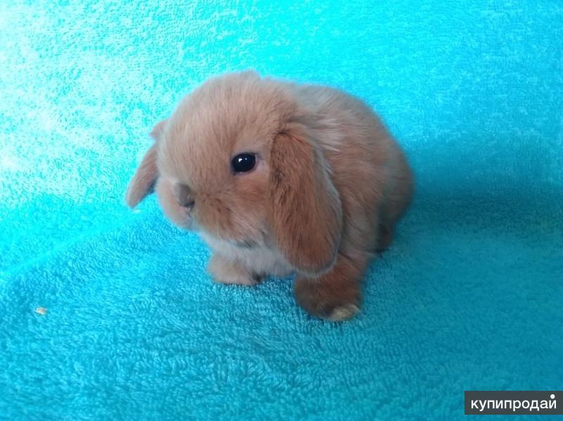 Карликовые крольчата. Питомник
