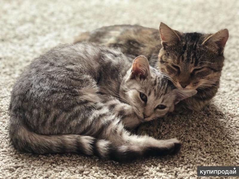 Ищут дом и заботливых хозяев кошечки