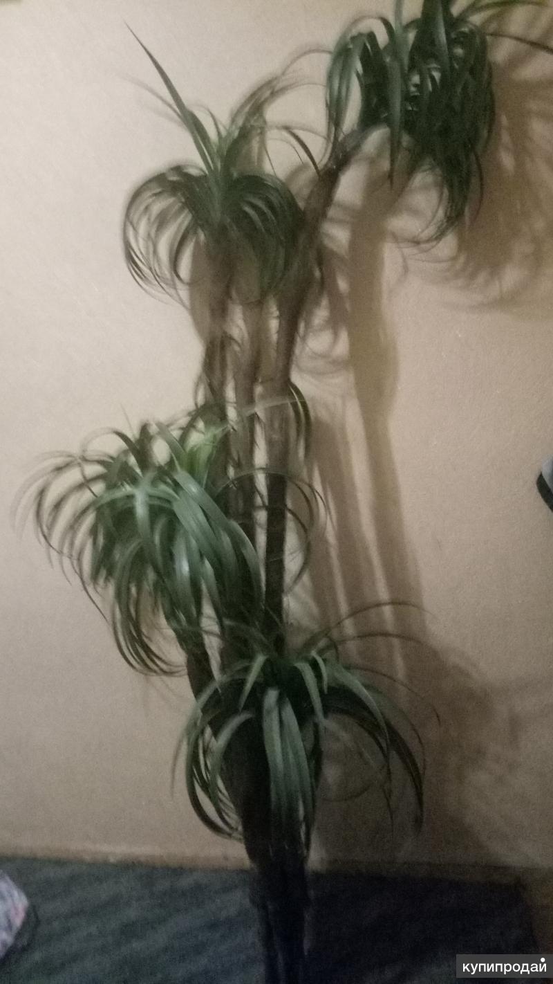 Пальма искусственная 230см