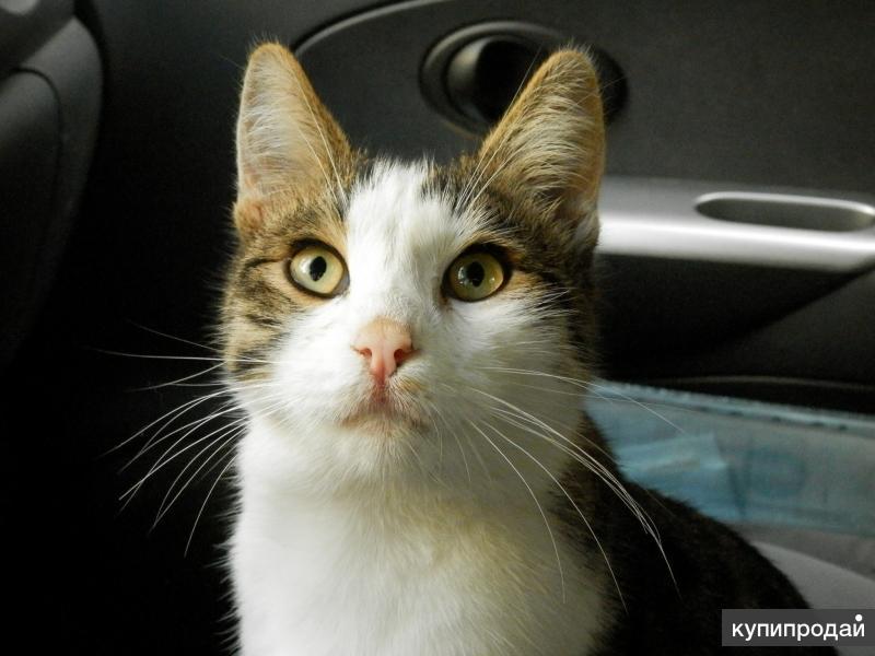 Возьмите красивого ласкового молодого котика. Привезём по Краснодару.