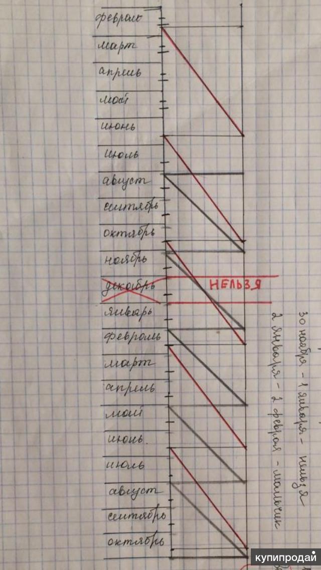 График зачатия ребёнка м/ж