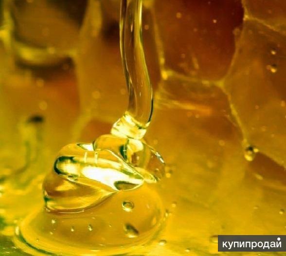 Мёд натуральный Алтайский оптом в Санкт-Петербурге!
