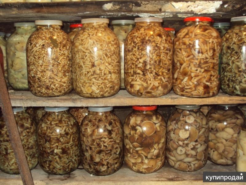 Продам соленые/маринованные грибы