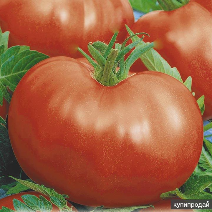 "Чудо-сад! Томат ""Богатырь"". Семена для Сибири. И другие семена томатов"
