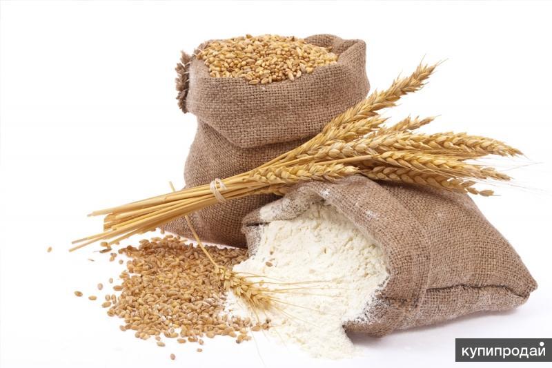 Мука пшеничная оптом от производителя, со склада в Екатеринбурге.