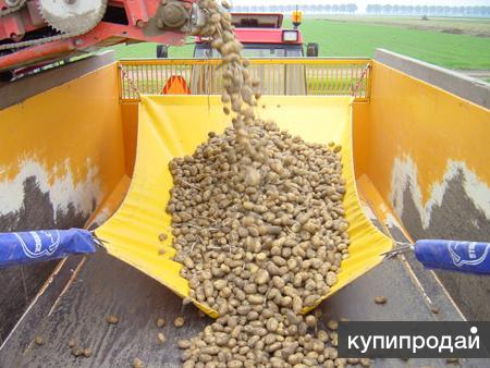 Система СТОП ШОК - бережная уборка картофеля