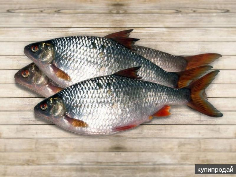 Рыба речная по привлекательным ценам . Розница-опт .