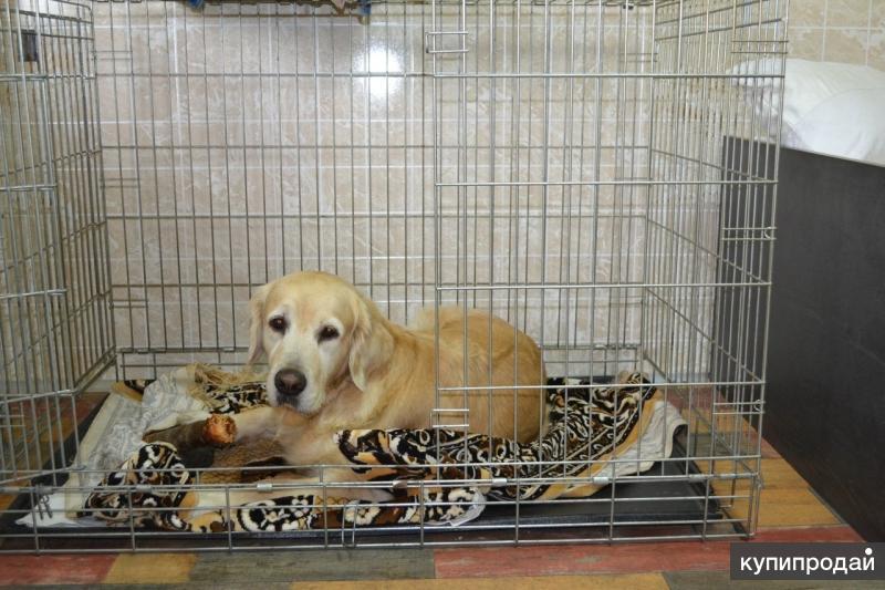 Домашняя мини-зоогостиница для собак