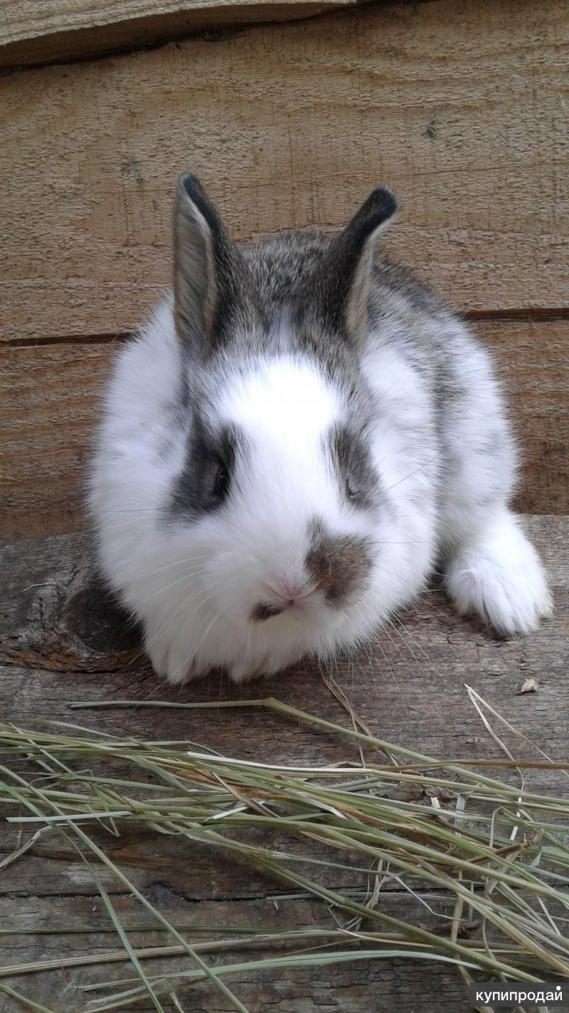 Кролики!!!