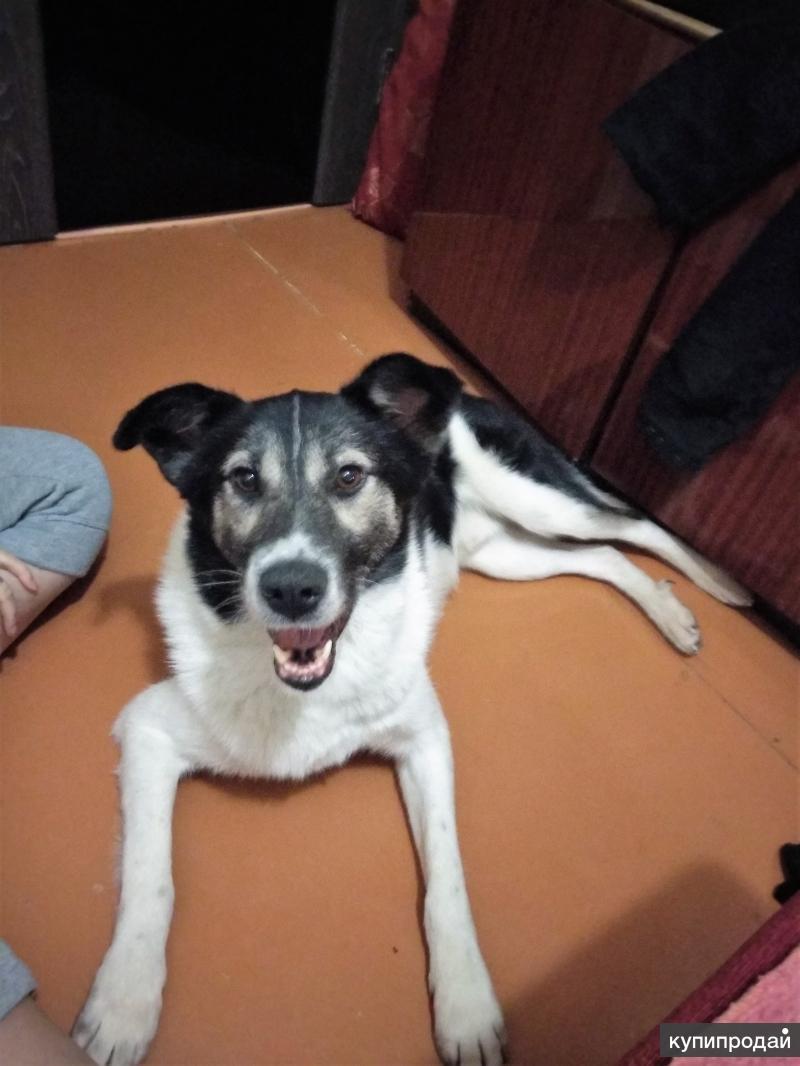 Бэй, 2 года, порода-друг
