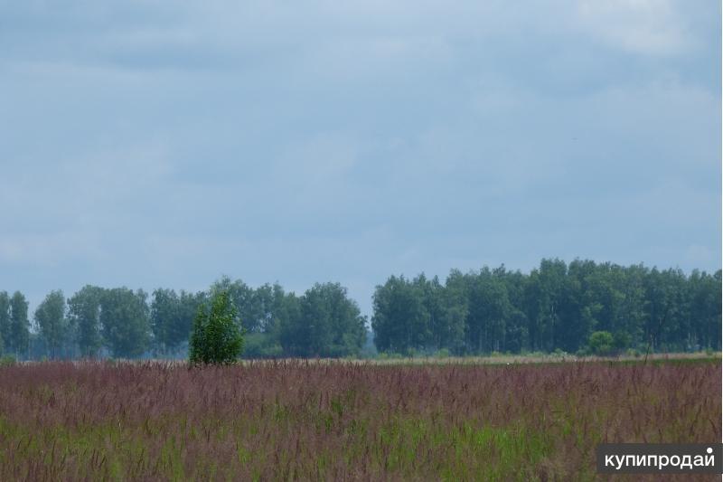 земельный участок у озера площадью 2,5Га