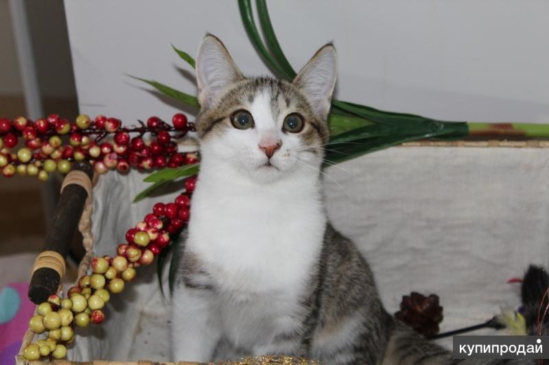 Котенок по имени Степка очень хочет стать домашним любимцем!