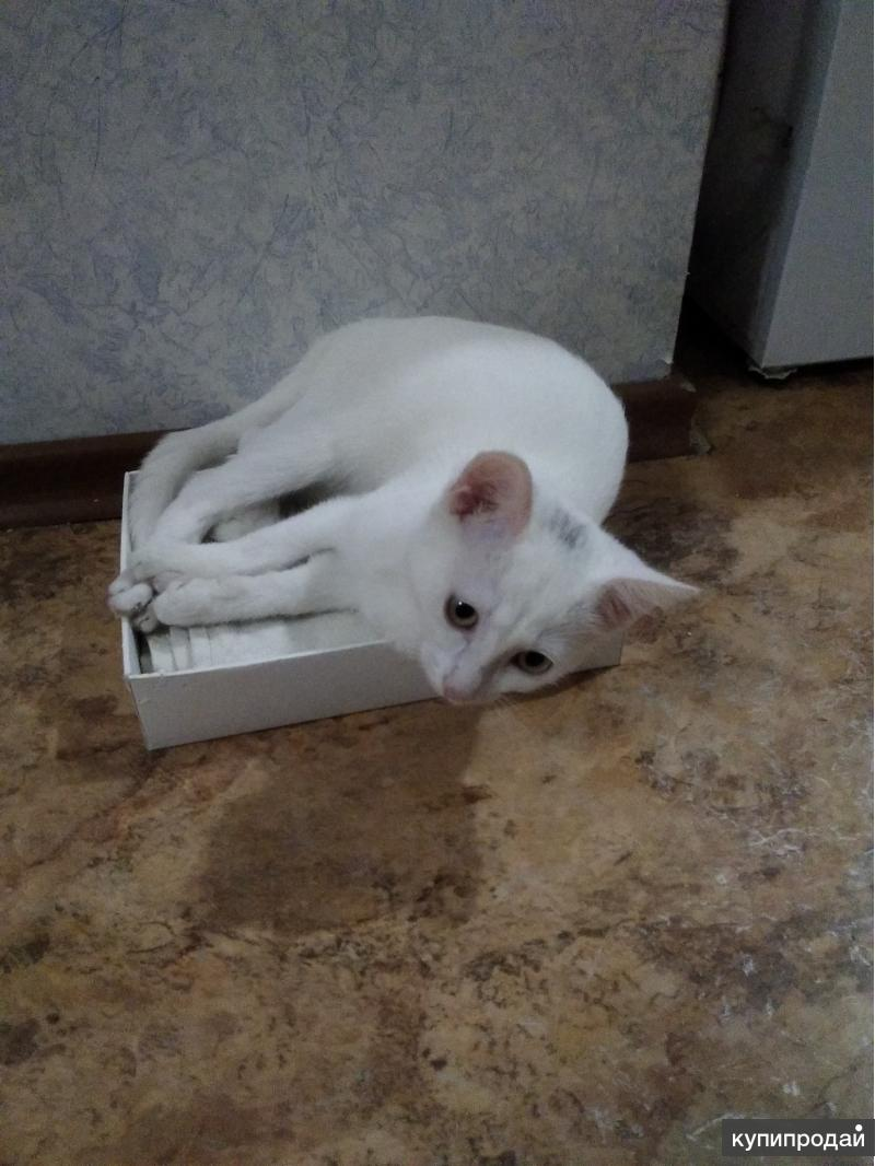 Отдам срочно котика