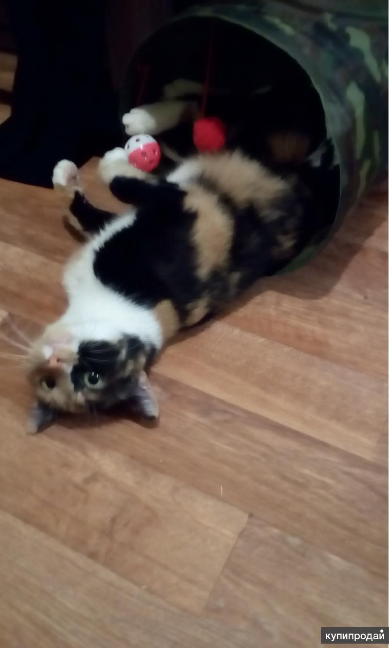 Красавица кошка в добрые руки!!!