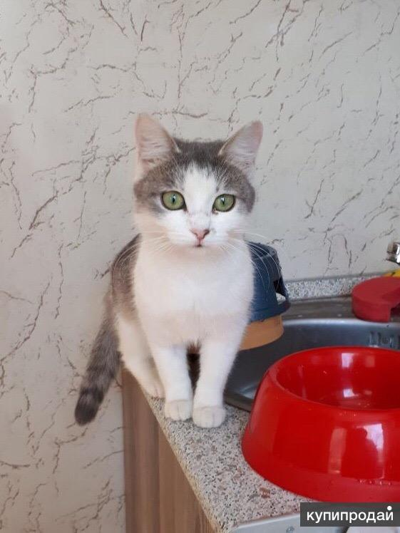 Кошка Оленька в добрые руки