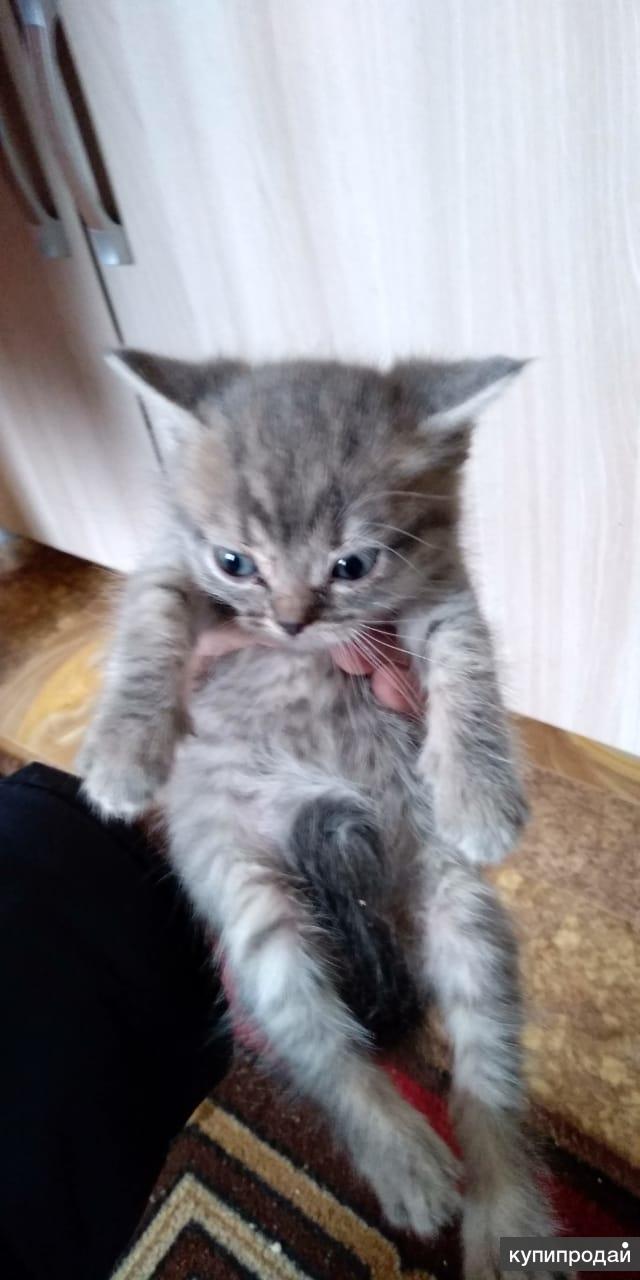Продаю котят 1мальчик 1 девочка