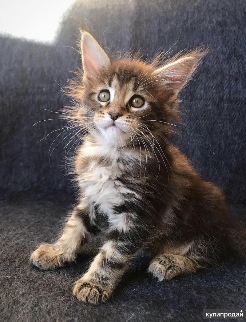 покажи фотографии кошек и сколько они стоят хорошего фотографа