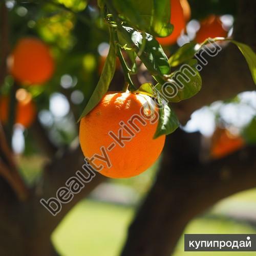 Эфирное масло Апельсина сладкого